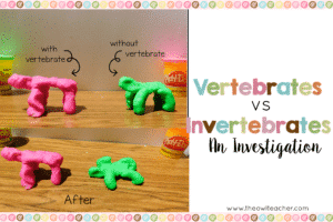 Students investigate vertebrates and invertebrates with this engaging, hands-on science activity to determine the purpose of the backbone.